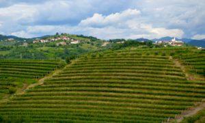Sulle colline del Brda sloveno