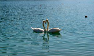Bled, il lago più romantico della Slovenia