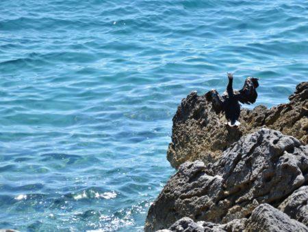 Istria orientale da scoprire e da amare