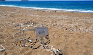 Le spiagge di Cipro amate dalle tartarughe