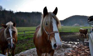 Slovenia orientale da scoprire: a Šentjur tra fattorie, laghi e antichi treni