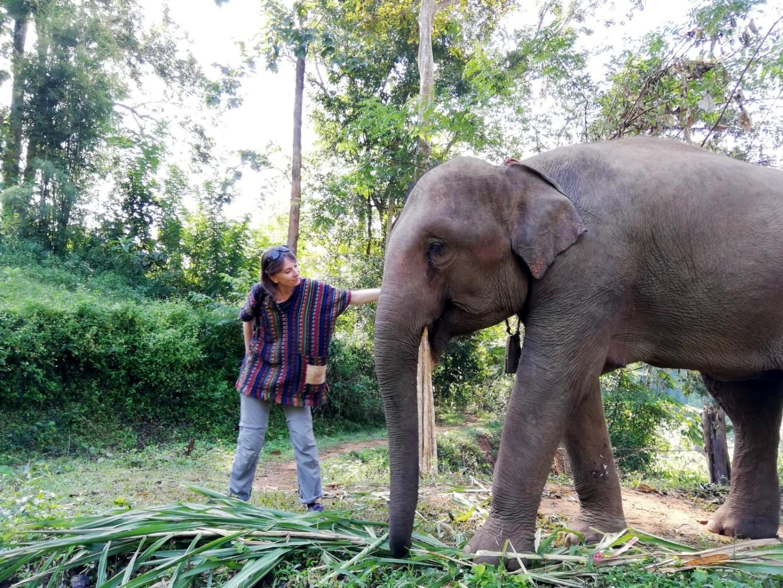 Dove Vedere Gli Elefanti In Thailandia In Modo Etico E Sostenibile