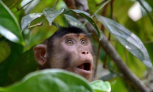 Borneo malese fai da te: il mio itinerario tra gli animali della giungla