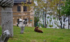 Bosnia-Erzegovina, 10 cose da sapere per visitare il Paese simbolo dei Balcani