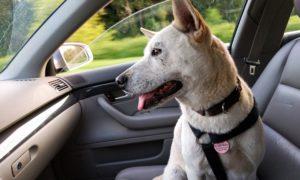 Viaggiare con il cane: le migliori mete pet friendly