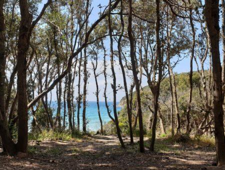 Cala Violina, una spiaggia da sogno nella Maremma Toscana