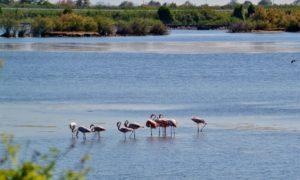 Relax e sport ad Albarella, l'isola dal cuore verde sul Delta del Po