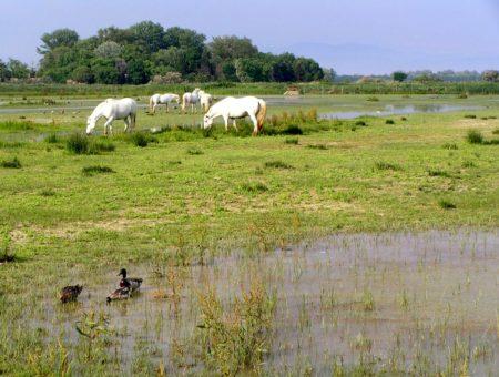 5 (+2) riserve naturali in Friuli Venezia Giulia dove vedere gli animali nel loro habitat