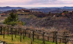 Scoprire il Collio friulano: itinerario in 8 tappe tra vigneti, borghi e castelli
