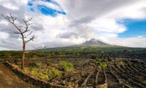 Azzorre: 10 cose da fare per innamorarsi di Pico, l'isola del vino e delle balene